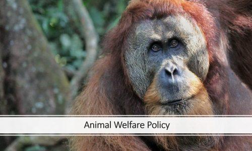 animal welfare thumbnail