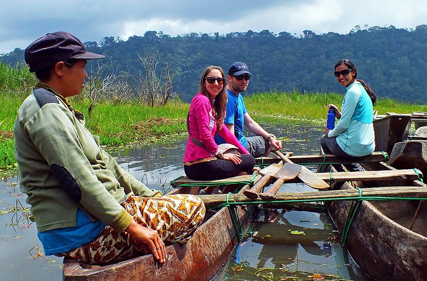 Green Rice Fields